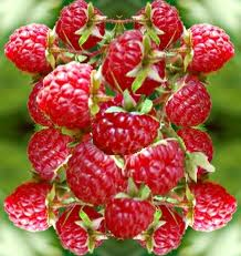 Raspberry Keytones, available at Alive Health Centre and Chains